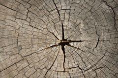 Baumstumpf des dunklen Brauns Lizenzfreies Stockbild
