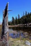Baumstumpf durch den Teich Lizenzfreies Stockbild