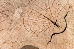 Baumstumpf, hölzerne Beschaffenheit, Draufsicht Stockbilder