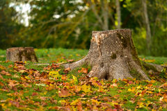 Baumstumpf-Herbstnaturlandschaft Stockfotos