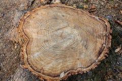 Baumstumpf-Holzabschluß oben hölzerner Beschaffenheitshintergrund, Schmutz maserte Bild Lizenzfreie Stockbilder