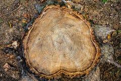 Baumstumpf-Holzabschluß oben hölzerner Beschaffenheitshintergrund, Schmutz maserte Bild Stockfoto