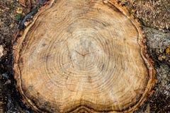 Baumstumpf-Holzabschluß oben hölzerner Beschaffenheitshintergrund, Schmutz maserte Bild Lizenzfreies Stockfoto