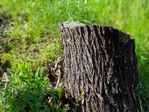 Baumstumpf im Gras im Stadtpark stockbilder