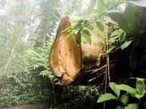 Baumstumpf im Holz stockfotografie