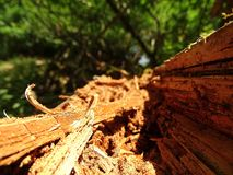 Baumstumpf am Rand der Spur lizenzfreie stockbilder