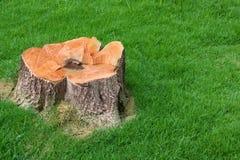 Baumstumpf und Feld des grünen Grases handhaben lizenzfreie stockfotografie