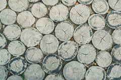 Baumstumpfbeschaffenheit Stockfoto