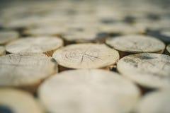 Baumstumpfbeschaffenheit Lizenzfreie Stockfotos