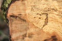 Baumstumpfbeschaffenheit Lizenzfreies Stockfoto