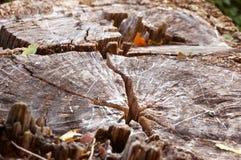Baumstumpfbeschaffenheit Browns alte Lizenzfreies Stockbild