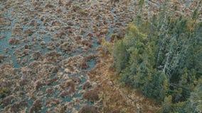 Baumsumpf Insel stock footage
