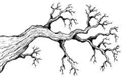 Baumthema, das 3 zeichnet Lizenzfreies Stockbild