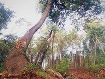 Baumtorte mitten in dem Wald stockfoto
