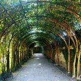 Baumtunnel in einem Salzburg-Garten Lizenzfreie Stockfotos