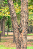 Baumunschärfehintergrund im Park von Thailand stockfotos