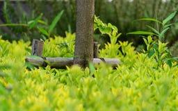 Baumunterstützung im Park, Abschluss oben Lizenzfreie Stockfotos