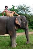 Baumuster und Elefant. lizenzfreies stockbild