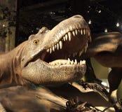 Baumuster von Tyrannosaurus Rex Lizenzfreie Stockfotos