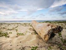 Baumwäsche oben auf dem Strandsand, ruinierte Genagelt im Boden geschleppt durch die Gezeiten stockfoto