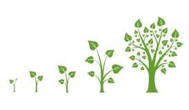 Baumwachstums-Vektordiagramm