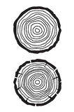Baumwachstumsringe Stockfotos
