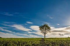 Baumweise zum Himmel Stockfoto