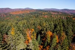 Bavarian Forest Stock Image