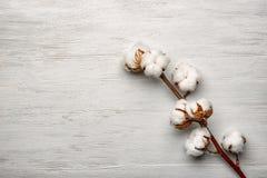 Baumwollblumen auf Hintergrund Stockfotografie