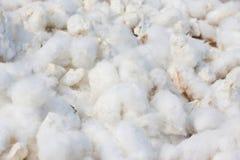 Baumwollhintergrund Lizenzfreies Stockfoto