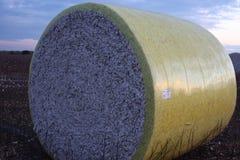 Baumwollkaution Stockbilder