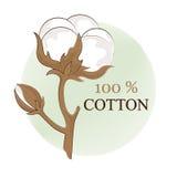 Baumwollniederlassung 100% ECO Baumwollblume Botanische Kunst lokalisiert auf weißem Hintergrund Gebrauch für den Druck, Dekorati Lizenzfreie Stockfotos