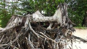 Baumwurzel auf dem Strand bei Khao Lak Stockbilder