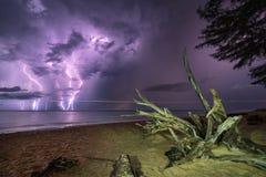 Baumwurzel und -blitz im Meer Stockfotografie