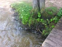 Baumwurzeln im Wasser. Am Arendsee Germany Stock Image