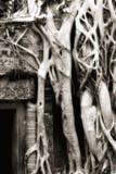 Baumwurzeln an Ta Prohm Stockfotografie