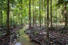 Baumwurzeln und grüner Wald, Landschaftsregenwaldnationalpark Lizenzfreies Stockbild
