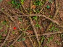Baumwurzeln und -gras lizenzfreie stockfotografie