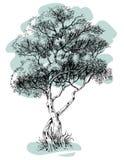 Baumzeichnung Stockfoto