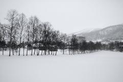 Baumzeile im Schnee Stockbilder