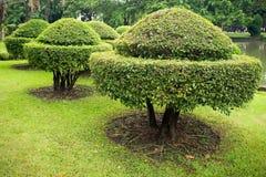 Baumzutat ist eine schöne Form lizenzfreie stockfotos