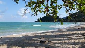 Baumzweig auf dem Strand Stockfotos