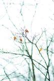 Baumzweig mit roten Blättern Stockfotos