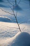 Baumzweig unter Schnee Stockbilder