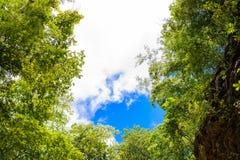 Baumzweige auf blauem Himmel Stockbilder