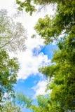 Baumzweige auf blauem Himmel Lizenzfreies Stockbild