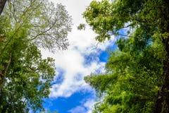 Baumzweige auf blauem Himmel Lizenzfreie Stockbilder