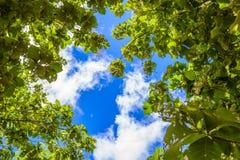 Baumzweige auf blauem Himmel Stockfotografie