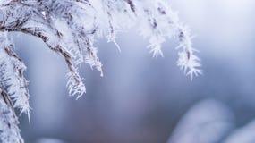 Baumzweige bedeckt in der Frostbeule Stockbild