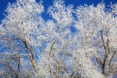 Baumzweige eingefroren im Dezember Lizenzfreies Stockbild